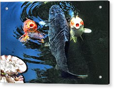 Three Is Crowd Acrylic Print by Don Mann