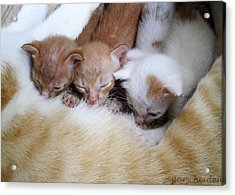 Three Kittens Suckling Acrylic Print by Gary Heiden