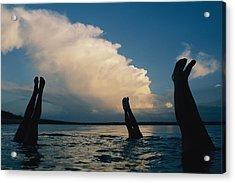 Three Pairs Of Legs Stick Acrylic Print by Joel Sartore