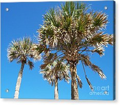 Acrylic Print featuring the photograph Three Palms by Jeanne Forsythe