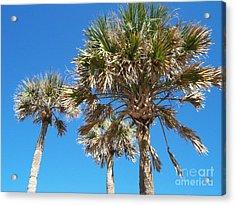 Three Palms Acrylic Print by Jeanne Forsythe