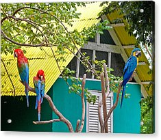 Acrylic Print featuring the photograph Three Parrots by Ann Murphy