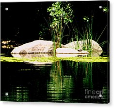 Three Rocks And A Turtle Acrylic Print by Maria Scarfone