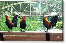 Three Roosters  Acrylic Print by Peter Mooyman