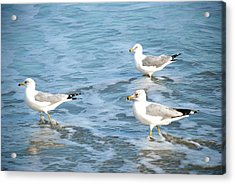 Acrylic Print featuring the photograph Three Seagulls by Kathy Gibbons