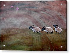 Three Sheep In The Wind And Pigs Fly Acrylic Print by Jean Moore