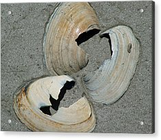 Three Shells Acrylic Print by Fredrik Ryden