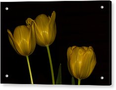 Acrylic Print featuring the photograph Three Tulips by Ed Gleichman