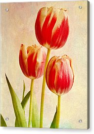 Acrylic Print featuring the photograph Three Tulips by James Bethanis