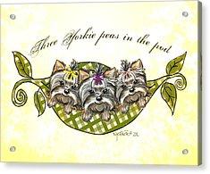 Three Yorkie Peas In The Pod Acrylic Print
