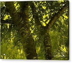 Through The Green Man's Eyes Acrylic Print