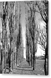 Through The Trees Acrylic Print by Jonathan Lagace