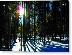 Acrylic Print featuring the photograph Through The Trees by Shannon Harrington