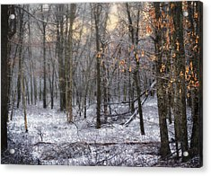 Acrylic Print featuring the photograph Through The Woods Into The Sunset by Yelena Rozov