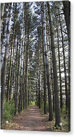 Acrylic Print featuring the photograph Through The Woods by Jeannette Hunt