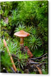 Thumbelina's Forest Acrylic Print