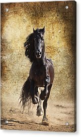 Thundering Stallion D6574 Acrylic Print by Wes and Dotty Weber