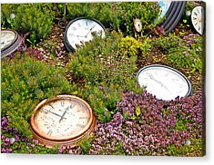 Thyme And Time Acrylic Print by Chris Thaxter