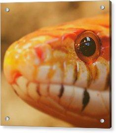 #tier #tiere #animals #schlange #snake Acrylic Print