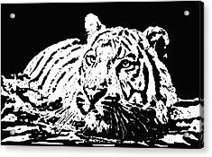 Tiger 2 Acrylic Print by Lori Jackson