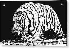 Tiger 3 Acrylic Print by Lori Jackson