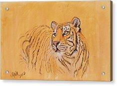 Tiger Alert Acrylic Print