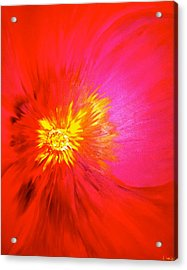 Tiger Flower.. Acrylic Print by Pretchill Smith