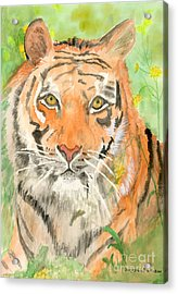 Tiger In The Meadow Acrylic Print by Delores Swanson