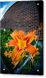 Tiger Lily 04 Acrylic Print