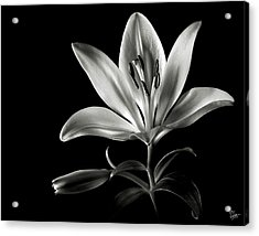 Tiger Lily In Black And White Acrylic Print by Endre Balogh