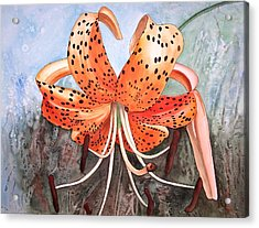 Tiger Lily Acrylic Print by Karen Casciani