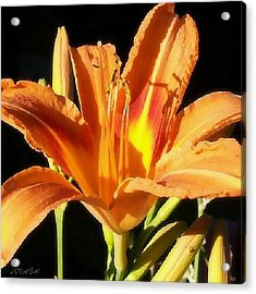 Tiger Lily Love. #lily #tigerlily #love Acrylic Print
