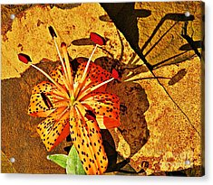 Tiger Lily Still Life  Acrylic Print by Chris Berry
