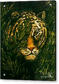 Tiger On The Prowl Acrylic Print by C Ballal