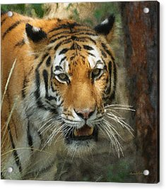Tiger Painterly Square Format  Acrylic Print by Ernie Echols