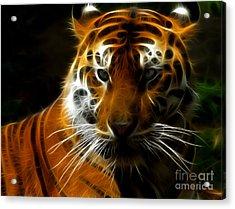 Tiger Portrait Acrylic Print by Katja Zuske