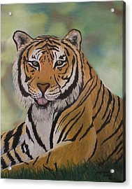 Tiger Acrylic Print by Shadrach Ensor