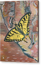 Tiger Swallowtail Acrylic Print by Amy Reisland-Speer