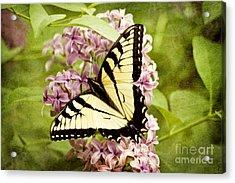 Tiger Swallowtail Butterfly Acrylic Print by Cheryl Davis