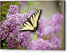 Acrylic Print featuring the photograph Tiger Swallowtail On Lilac Textured by Cheryl Davis