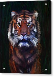 Tiger Tiger Acrylic Print by Michelle Wrighton