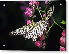 Acrylic Print featuring the photograph Tilted Pink by Amee Cave