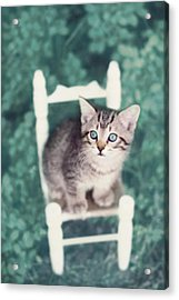 Time Out Acrylic Print by Amy Tyler