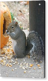 Acrylic Print featuring the photograph Time To Eat by Mark McReynolds
