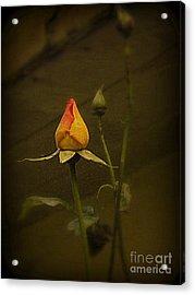 Timeless Rose Acrylic Print by Carol  Hynes