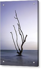 Timeless Tree Acrylic Print