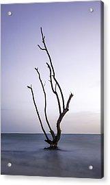 Timeless Tree Acrylic Print by Nick  Shirghio