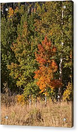 Acrylic Print featuring the photograph Tim's Tree by Drusilla Montemayor