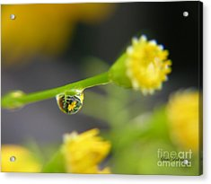 Acrylic Print featuring the photograph Tiney Drop by Yumi Johnson