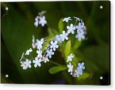 Tiny Dancers Acrylic Print